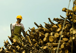 Commercial logging in Tengchong, China (Photo: Simon Lim)