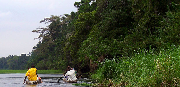 People paddle in dugout canoes past a forest in Cameroon.