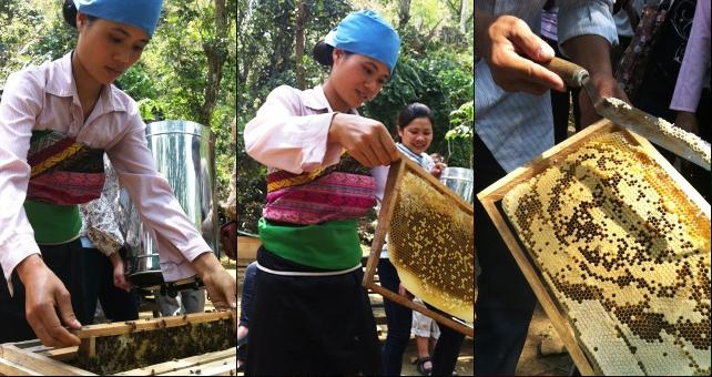 Three images of women removing honeycomb frames from a modern beehive.