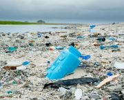 Plastic debris litters the beach on Clipperton Island, a tiny uninhabited coral atoll in the eastern Pacific Ocean (Photo: Clifton Beard, Creative Commons via Flickr)