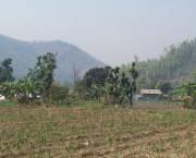 Maize crops in Kirtipur Village, Nawalparasi District, Nepal (Photo: Kate Wilson/IIED)