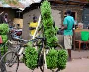 Traders take matooke to market