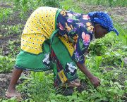 A woman farming in Tanzania. Efforts are being made to ensure women are less negatively affected by decisions on large-scale agricultural investments than men (Photo: Dirk Musschoot/vredeseilanden, Creative Commons via Flickr)