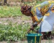 A woman farmer