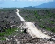 Land cleared for palm oil production, Indonesia (Photo: Rainforest Action Network, Creative Commons via Flickr)