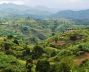 Mpugu Parish borders Bwindi Impenetrable National Park (top right). Photo: Andrew Kirkby