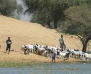 Pastoralists with their goats in Niger.