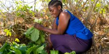A woman picks fresh greens