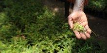 A handful of seedlings