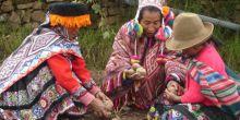 Indigenous communities sharing potatoes in the Potato Park, near Cusco, Peru. Credit: Asociacion ANDES