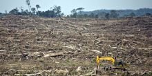 Clearing forest for a palm oil plantation in Borneo (Photo: Rainforest Action Network, Creative Commons via Flickr)
