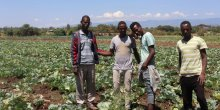 Four young Ethiopian men standing in a field of cabbages