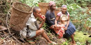 Baka women collecting non-timber forest products in Nomedjoh, Cameroon (Photo: Indra Van Gisbergen)