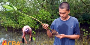 A young man looking at a mangrove seedling