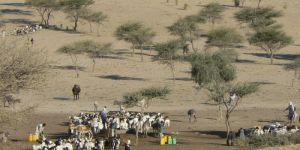 Pastoralists in Niger. Drylands are not deserts: they have ephemeral but resilient resources.(Photo: Stephen Anderson/IIED)