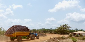 Forestry tractor carrying fruits from a field