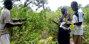 A herbalist shares information on medicinal and food plants growing in Kaya Kinondo Sacred Coastal Forest in Kenya