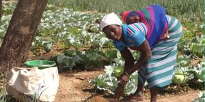 A woman using homemade compost in her garden in eastern Burkina Faso (Photo: ANSD)