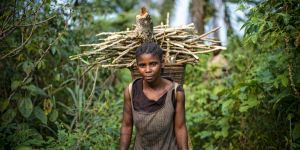 A woman carries firewood in the rainforest
