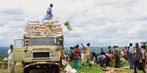 Farmers loading tea leaves in Malawi (Photo credit: nchenga nchenga, Creative Commons via Flickr)