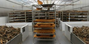 A trolley load and shelves of cinnamon dry inside a special drying facility