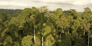 The Forest Investment Program, an example of an investment fund with simplified funding frameworks, has invested $10 million in a $24 million project with the African Development Bank to restore Ghana's rapidly degrading forests (Photo: Greg Neate, Creative Commons, via Flickr)