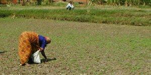 A women farmer tends crops on a dried river pond