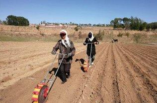 Two farmers tilling a field