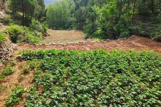 A terraced field