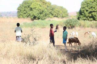 Children and animals play in the hazardous surroundings