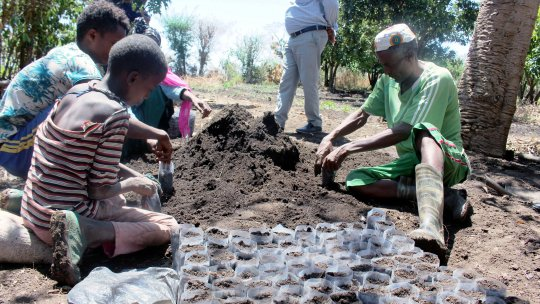 People planting seedlings