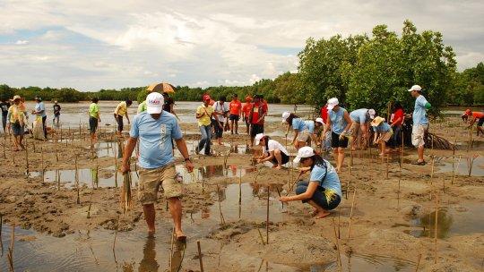 People planting seedlings in water
