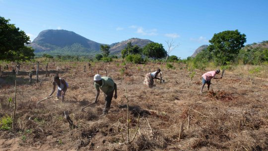 Farm labourers in a field