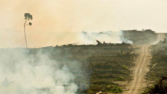 A trail through burned rainforest