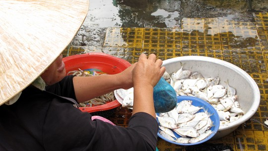 A woman market trader holds up a small plastic bag of fresh fish.