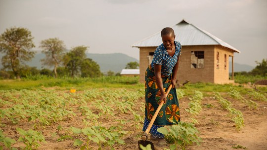 Woman tilling soil with a hoe.