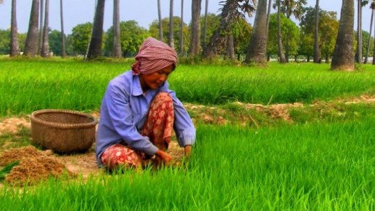 Cambodia's farmers face an uncertain future as the climate changes (Photo: Lorena Pajares via Creative Commons http://creativecommons.org/licenses/by/2.0/)