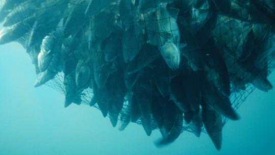 A net full of cod