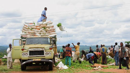 Farmers loading tea leaves in Malawi (Photo credit: nchenga nchenga, Creative Commons via Flickr)